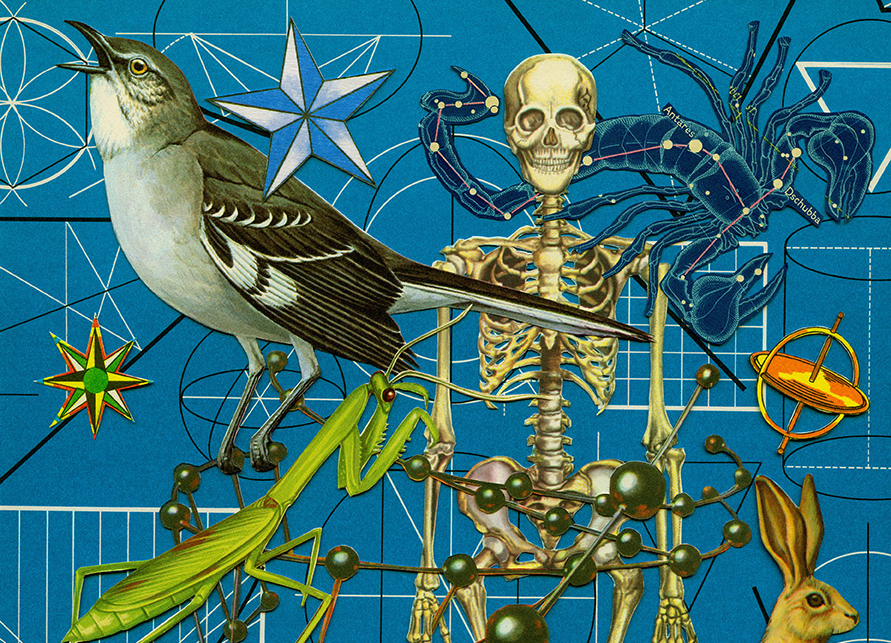 Graphic of a bird, prey mantis, skeleton, scorpion with constellation design and rabbit on blue background of geometric and scientific shapes.